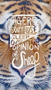 tigers don't lose sleep